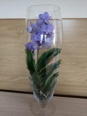 голубая орхидея голубое облако