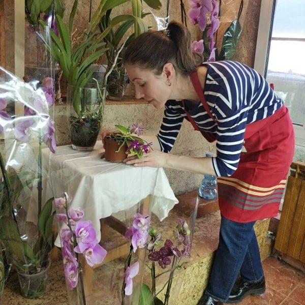 салон орхидей