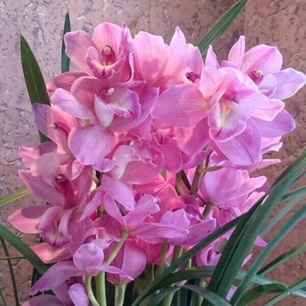 орхидея свадебный подарок